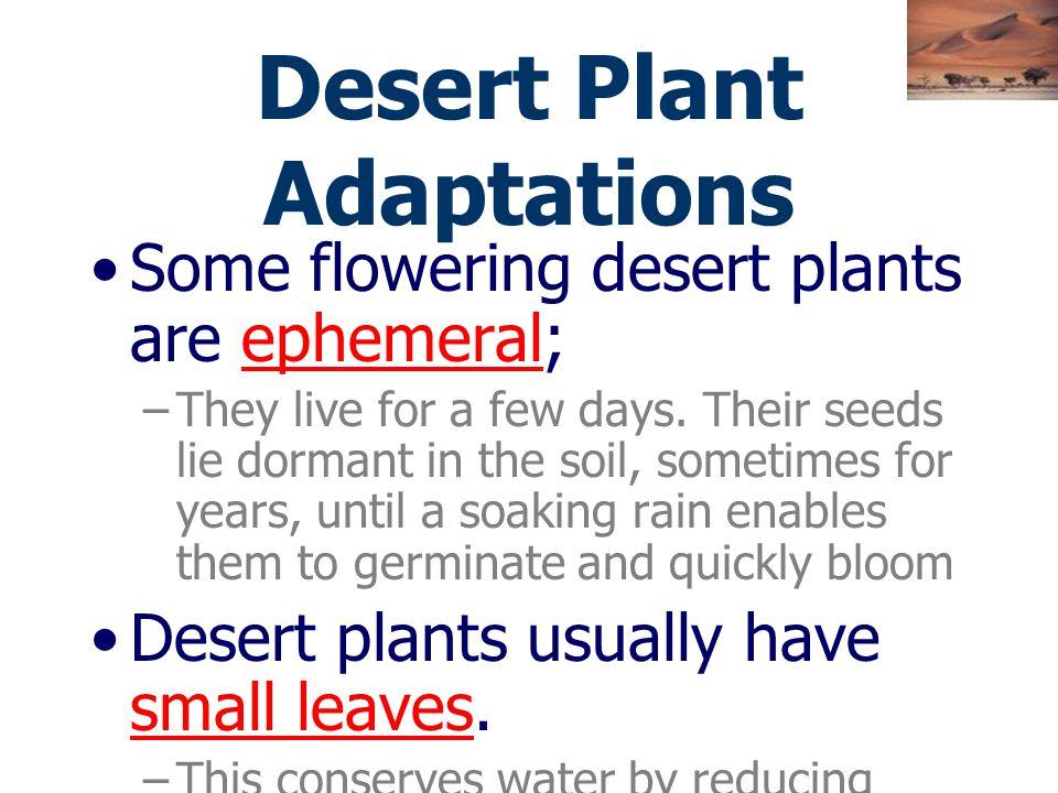 พืชที่อยู่ในทะเลทราย มีลำต้นอ่อนนิ่ม ฉ่ำไปด้วยน้ำ มีขี้ผึ้งฉาบ อยู่รอบใบและลำต้น – ได้แก่ พวกกระบองเพชร หรือไม้พุ่มผลัด ใบ ฤดูที่พืชพวกนี้เจริญเติบโตม