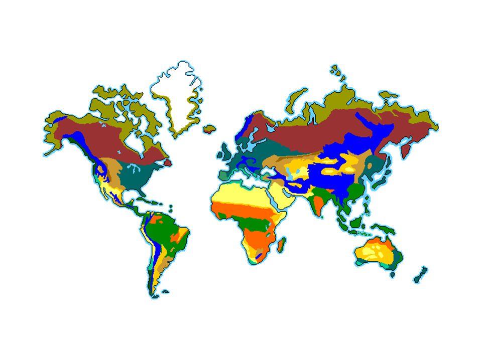 Coniferous (Boreal) Forest มีพืชพวกสนเป็นส่วน ใหญ่ ต้นไม้เตี้ยที่เป็นพืชปก คลุม คือ พวกมอส หญ้า และไม้พุ่มในแถบหนาว บางแห่งมีต้นไม้ใหญ่ และสูงมาก เช่น เรดวูด ป่าไม้พวกนี้เป็นแหล่งน้ำ จืดของโลก เช่น – ทะเลสาบซุพีเรียในอเมริกาเหนือ – ทะเลสาบไบคาลในเอเซีย