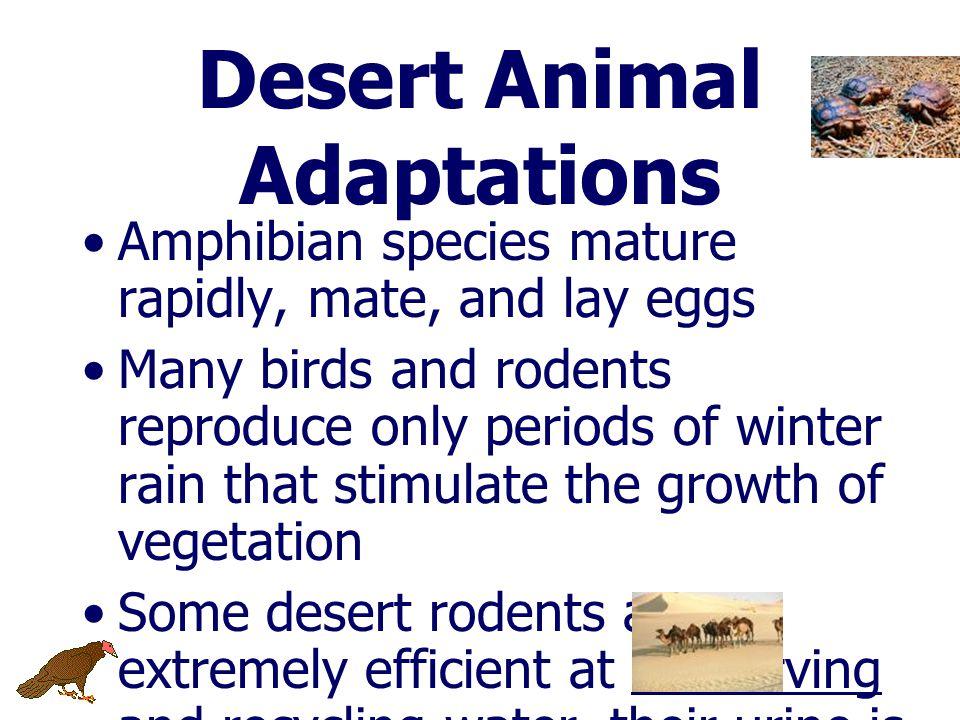 สัตว์ต่างๆ ในทะเลทราย พบในบริเวณที่มีพืชเกิดขึ้น ขุดรูอยู่ใต้ดินในตอนกลางวันและออก หากินในเวลากลางคืน – เช่น กระรอก สัตว์เลื้อยคลาน แมลง แมงมุม แมงป่อ