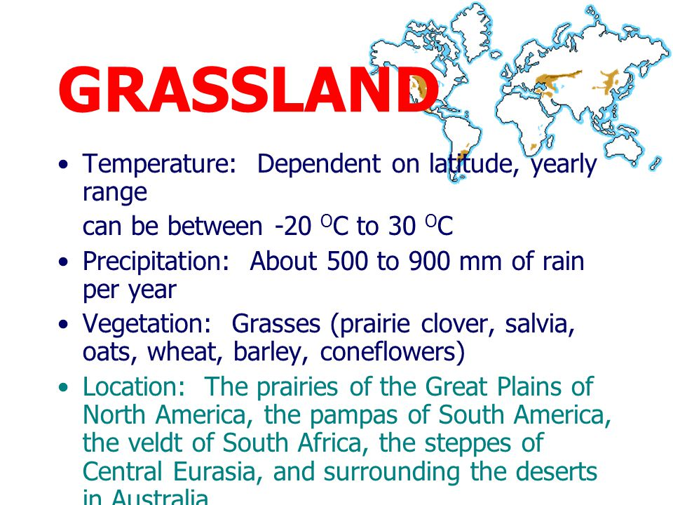 GRASSLAND Large parts of grasslands are now planted with wheat, barley, and maize Most famous animal are the large grazers and browsers of the savannah, –lion, cheetah, elephant, rhinoceros, giraffe, buffalo, zebra and numerous species of antelopes