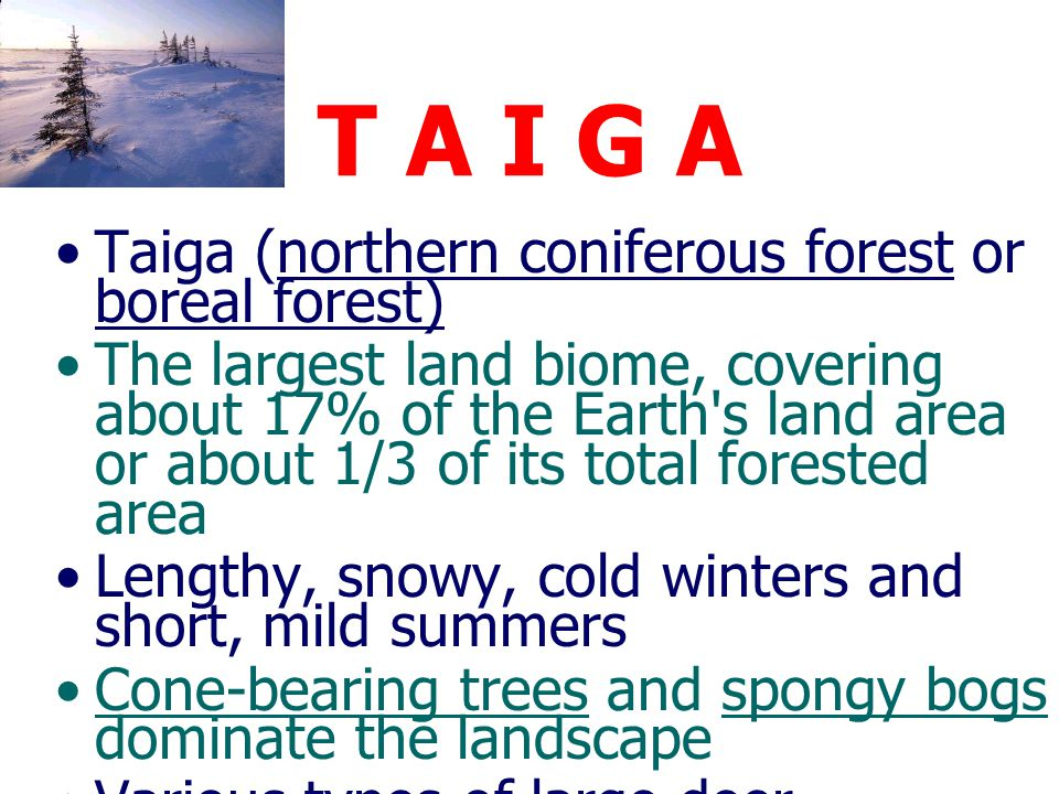 TAIGA (Coniferous Forest)