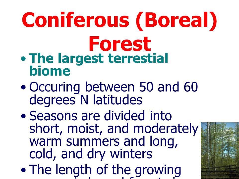 ป่าสนในแถบเหนือ เป็นป่าที่อยู่ในแถบขั้วโลก ลงมาในบริเวณอลาสกา แคนาดา สแกนดิเนเวีย และไซบีเรีย ระหว่างเส้นรุ้ง 50- 60 องศาเหนือ การใช้ประโยชน์จากป่าสน