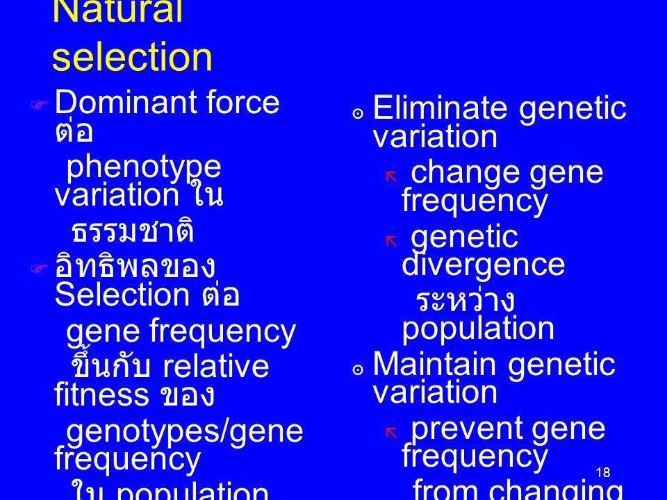 18 Natural selection  Dominant force ต่อ phenotype variation ใน ธรรมชาติ  อิทธิพลของ Selection ต่อ gene frequency ขึ้นกับ relative fitness ของ genot