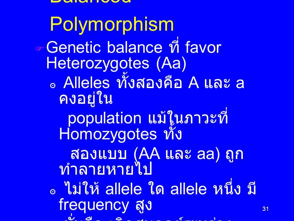 31  Genetic balance ที่ favor Heterozygotes (Aa) ๏ Alleles ทั้งสองคือ A และ a คงอยู่ใน population แม้ในภาวะที่ Homozygotes ทั้ง สองแบบ (AA และ aa) ถูก ทำลายหายไป ๏ ไม่ให้ allele ใด allele หนึ่ง มี frequency สูง ๏ นั่นคือ เกิดสมดุลย์ระหว่าง alleles A และ a  ศึกษา wild population และ human population Balanced Polymorphism