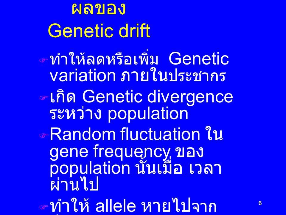 6 ผลของ Genetic drift  ทำให้ลดหรือเพิ่ม Genetic variation ภายใน ประชากร  เกิด Genetic divergence ระหว่าง population  Random fluctuation ใน gene frequency ของ population นั้นเมื่อ เวลา ผ่านไป  ทำให้ allele หายไป จาก ประชากร