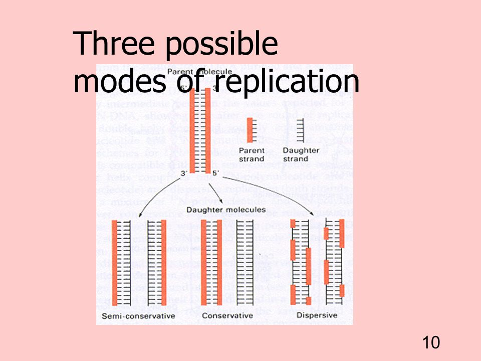 10 Three possible modes of replication