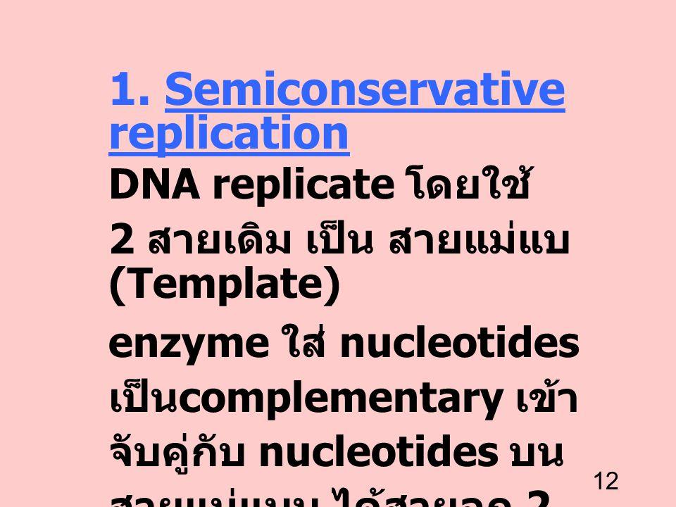 12 1. Semiconservative replication DNA replicate โดยใช้ 2 สายเดิม เป็น สายแม่แบ (Template) enzyme ใส่ nucleotides เป็น complementary เข้า จับคู่กับ nu
