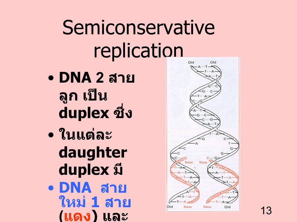 13 Semiconservative replication DNA 2 สาย ลูก เป็น duplex ซึ่ง ในแต่ละ daughter duplex มี DNA สาย ใหม่ 1 สาย ( แดง ) และ DNA สายเก่า 1 สาย ( ดำ )