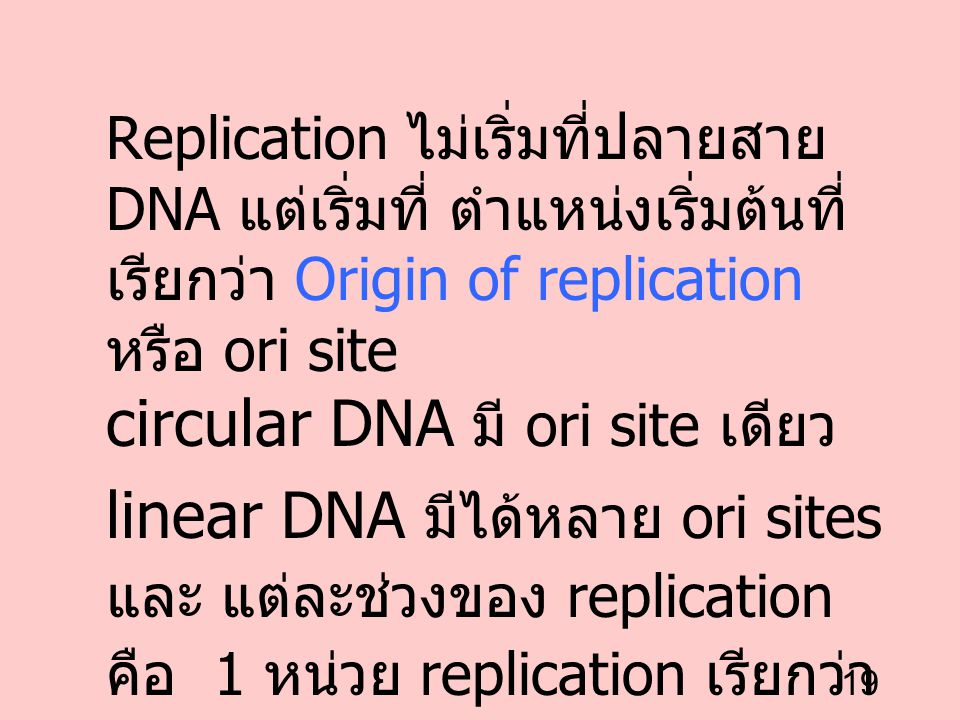 19 Replication ไม่เริ่มที่ปลายสาย DNA แต่เริ่มที่ ตำแหน่งเริ่มต้นที่ เรียกว่า Origin of replication หรือ ori site circular DNA มี ori site เดียว linea