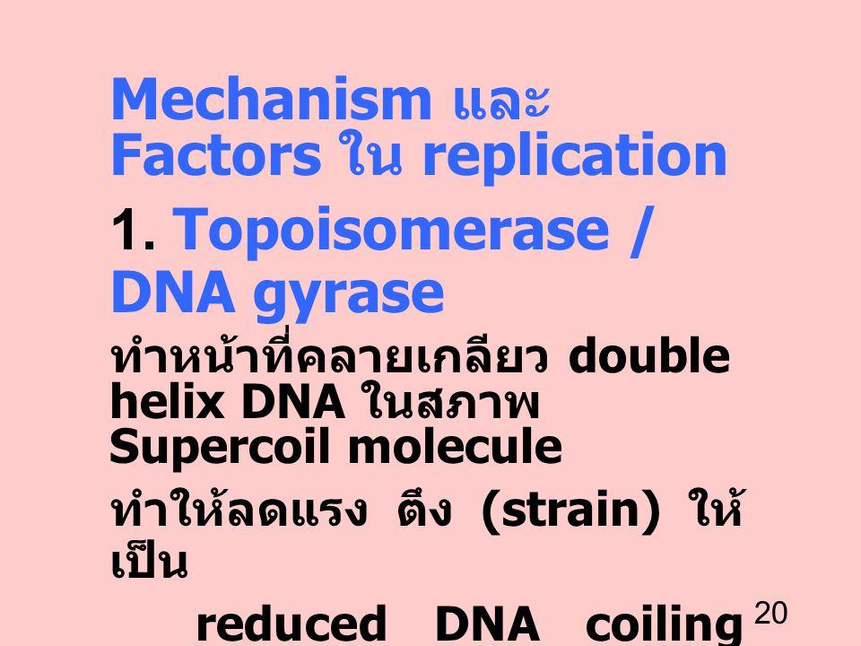 20 Mechanism และ Factors ใน replication 1. Topoisomerase / DNA gyrase ทำหน้าที่คลายเกลียว double helix DNA ในสภาพ Supercoil molecule ทำให้ลดแรง ตึง (s