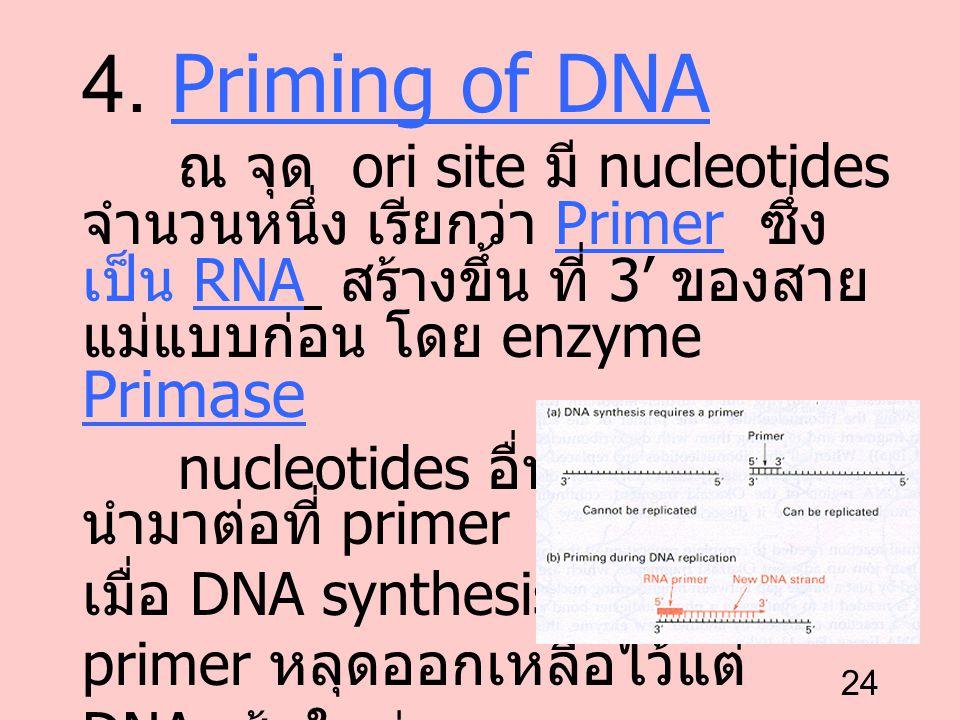 24 4. Priming of DNA ณ จุด ori site มี nucleotides จำนวนหนึ่ง เรียกว่า Primer ซึ่ง เป็น RNA สร้างขึ้น ที่ 3' ของสาย แม่แบบก่อน โดย enzyme Primase nucl