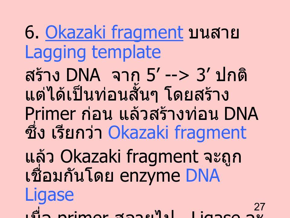 27 6. Okazaki fragment บนสาย Lagging template สร้าง DNA จาก 5' --> 3' ปกติ แต่ได้เป็นท่อนสั้นๆ โดยสร้าง Primer ก่อน แล้วสร้างท่อน DNA ซึ่ง เรียกว่า Ok