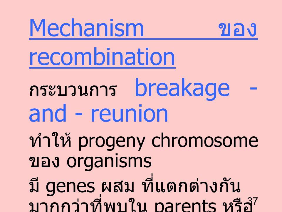 37 Mechanism ของ recombination กระบวนการ breakage - and - reunion ทำให้ progeny chromosome ของ organisms มี genes ผสม ที่แตกต่างกัน มากกว่าที่พบใน par