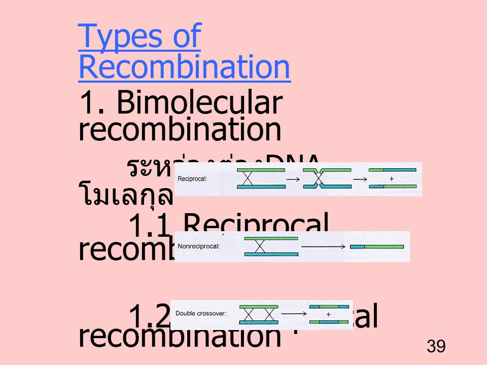 39 Types of Recombination 1. Bimolecular recombination ระหว่างต่าง DNA โมเลกุล 1.1 Reciprocal recombination 1.2 Nonreciprocal recombination 1.3 Double