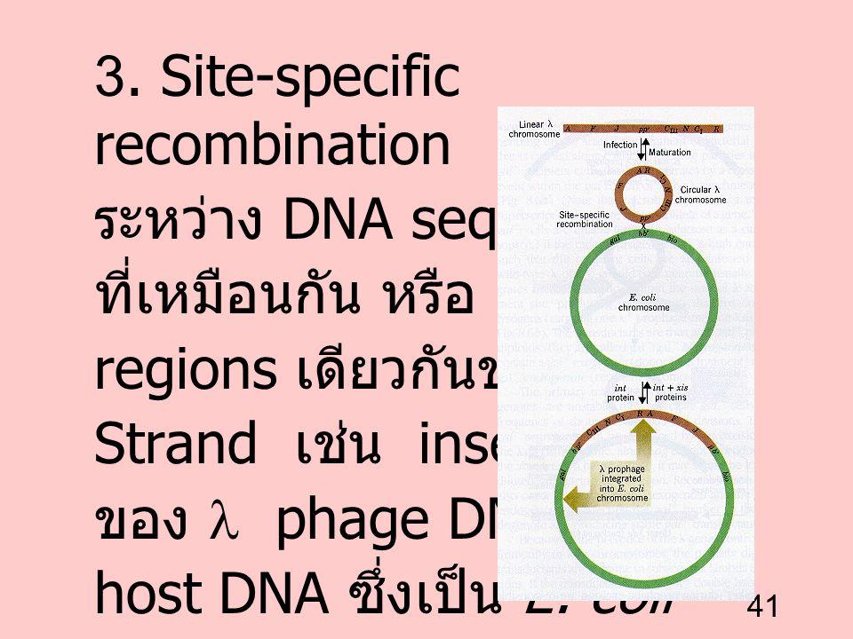 41 3. Site-specific recombination ระหว่าง DNA sequence ที่เหมือนกัน หรือ DNA regions เดียวกันของแต่ละ Strand เช่น insertion ของ phage DNA เข้า host DN
