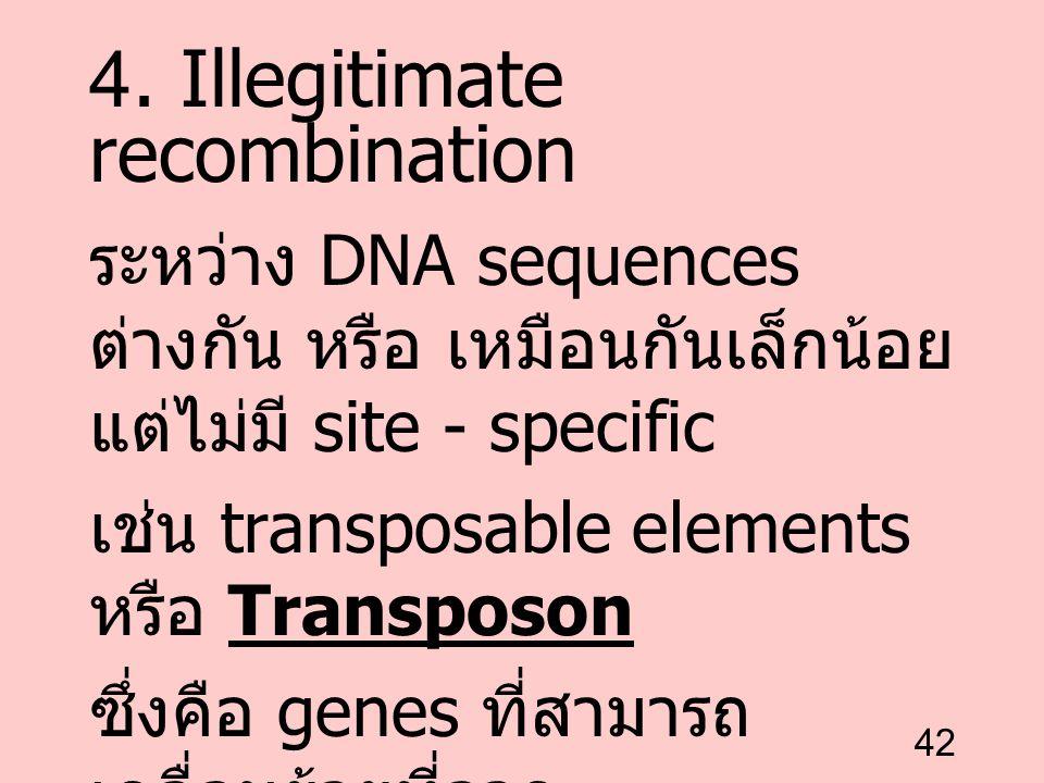 42 4. Illegitimate recombination ระหว่าง DNA sequences ต่างกัน หรือ เหมือนกันเล็กน้อย แต่ไม่มี site - specific เช่น transposable elements หรือ Transpo