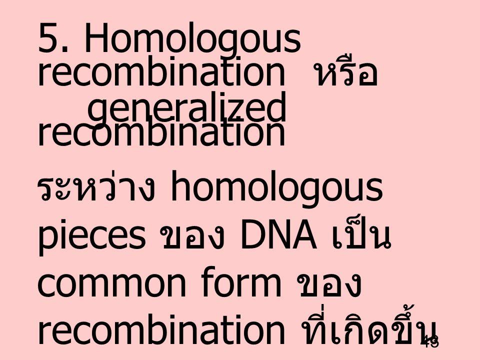43 5. Homologous recombination หรือ generalized recombination ระหว่าง homologous pieces ของ DNA เป็น common form ของ recombination ที่เกิดขึ้น ใน meio