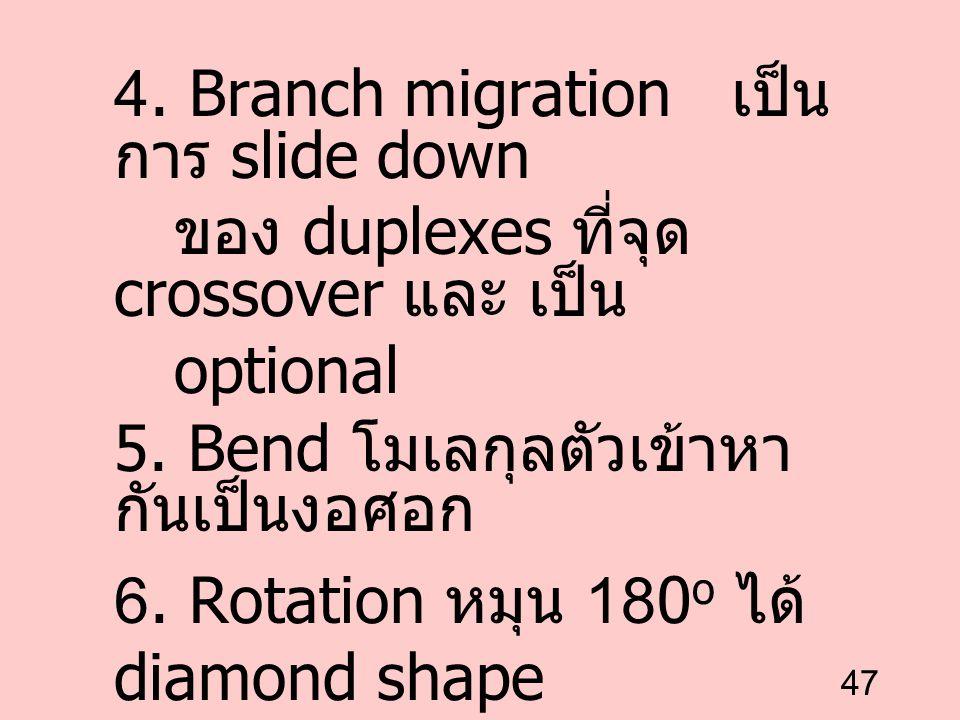 47 4. Branch migration เป็น การ slide down ของ duplexes ที่จุด crossover และ เป็น optional 5. Bend โมเลกุลตัวเข้าหา กันเป็นงอศอก 6. Rotation หมุน 180
