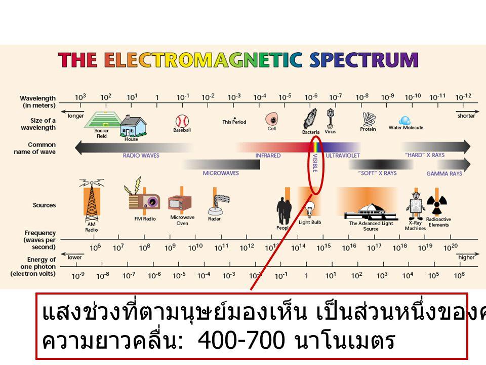 แสงช่วงที่ตามนุษย์มองเห็น เป็นส่วนหนึ่งของคลื่นแม่เหล็กไฟฟ้า ความยาวคลื่น : 400-700 นาโนเมตร