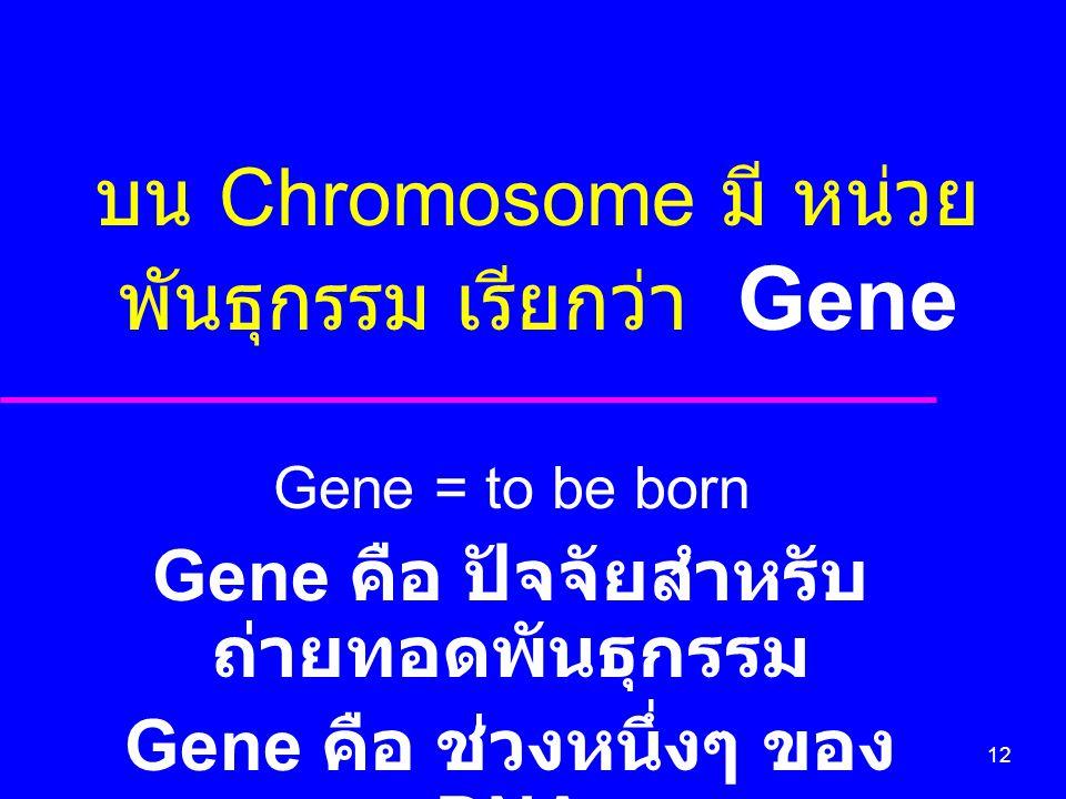 12 บน Chromosome มี หน่วย พันธุกรรม เรียกว่า Gene Gene = to be born Gene คือ ปัจจัยสำหรับ ถ่ายทอดพันธุกรรม Gene คือ ช่วงหนึ่งๆ ของ DNA