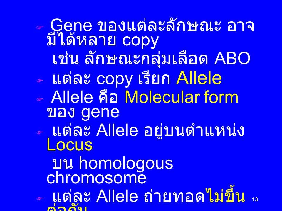 13  Gene ของแต่ละลักษณะ อาจ มีได้หลาย copy เช่น ลักษณะกลุ่มเลือด ABO  แต่ละ copy เรียก Allele  Allele คือ Molecular form ของ gene  แต่ละ Allele อย