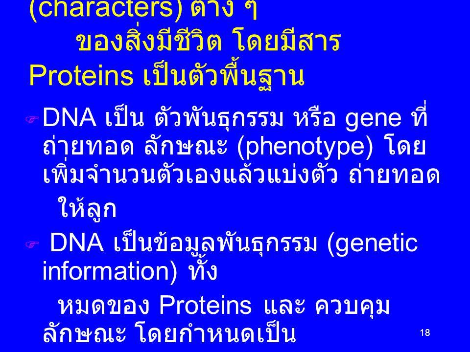 18 Phenotype คือ ลักษณะ (characters) ต่าง ๆ ของสิ่งมีชีวิต โดยมีสาร Proteins เป็นตัวพื้นฐาน  DNA เป็น ตัวพันธุกรรม หรือ gene ที่ ถ่ายทอด ลักษณะ (phen