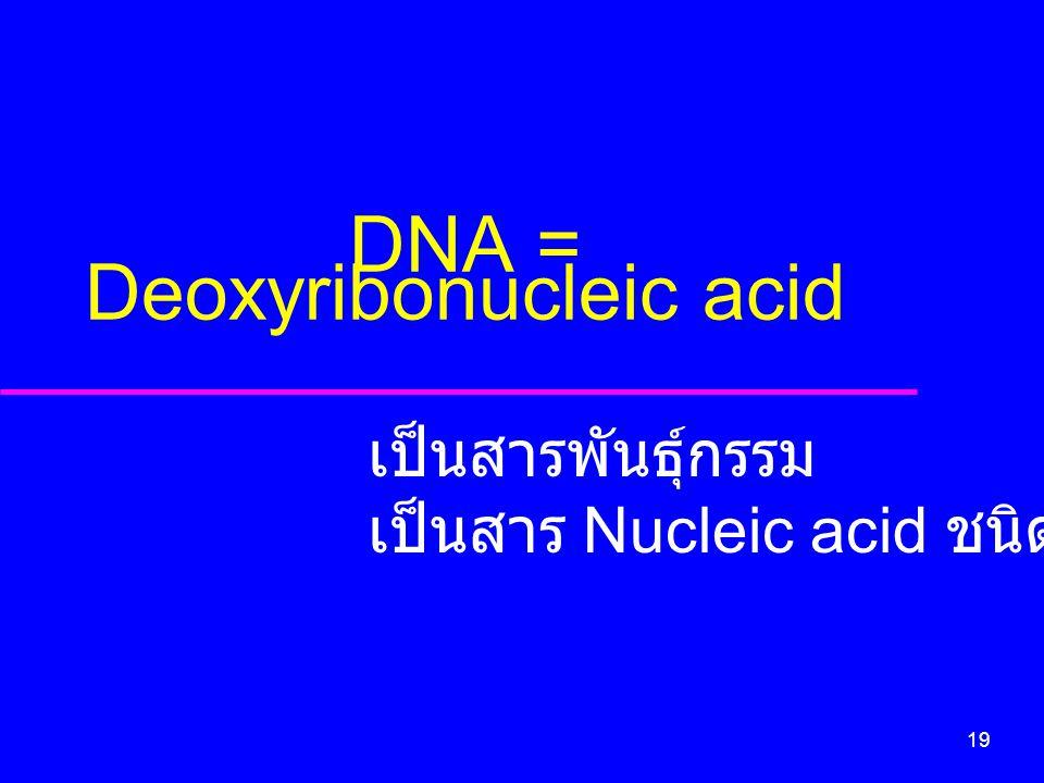 19 DNA = Deoxyribonucleic acid เป็นสารพันธุ์กรรม เป็นสาร Nucleic acid ชนิดหนึ่ง