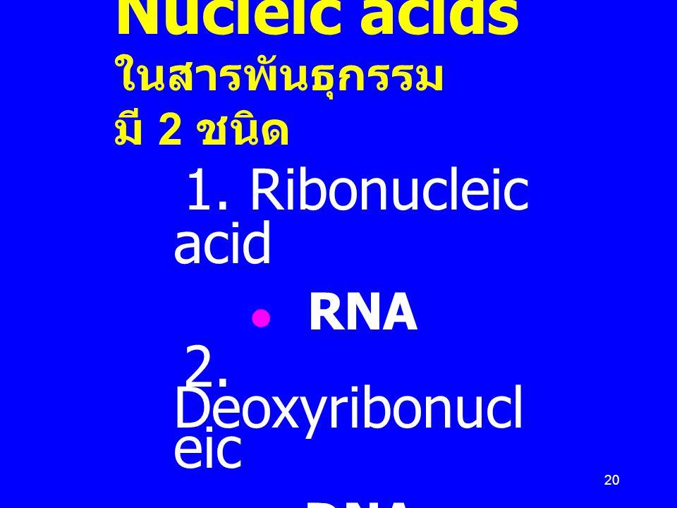 20 Nucleic acids ในสารพันธุกรรม มี 2 ชนิด 1. Ribonucleic acid RNA 2. Deoxyribonucl eic DNA