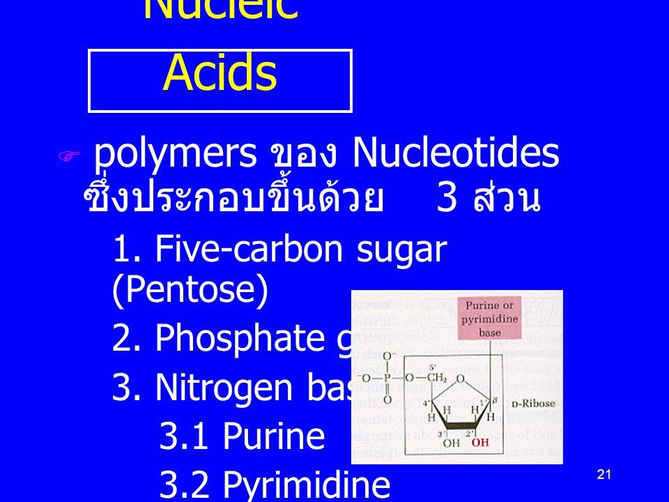 21 Nucleic Acids  polymers ของ Nucleotides ซึ่งประกอบขึ้นด้วย 3 ส่วน 1. Five-carbon sugar (Pentose) 2. Phosphate group 3. Nitrogen bases 3.1 Purine 3