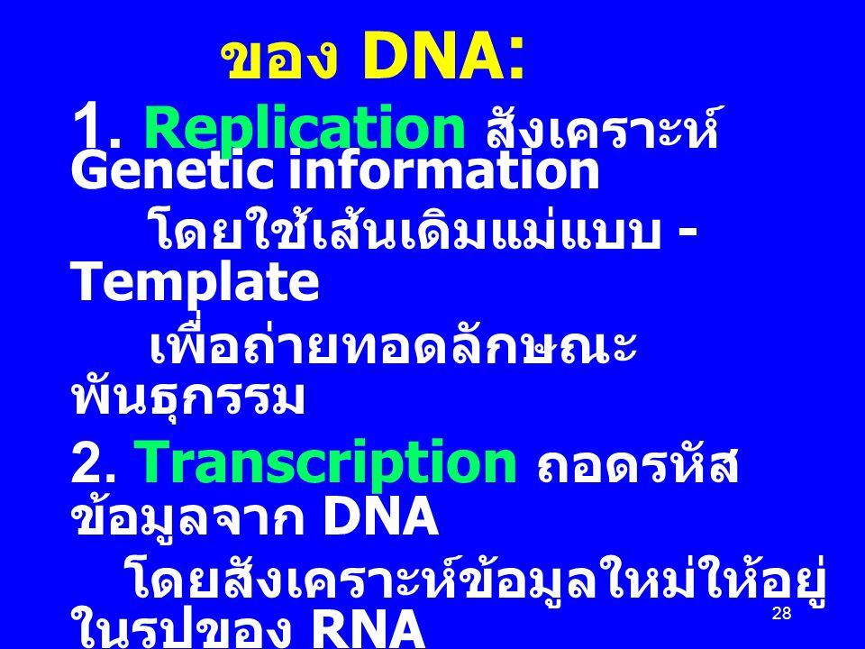 28 Central Dogma ของ DNA :  1. Replication สังเคราะห์ Genetic information  โดยใช้เส้นเดิมแม่แบบ - Template  เพื่อถ่ายทอดลักษณะ พันธุกรรม  2. Trans