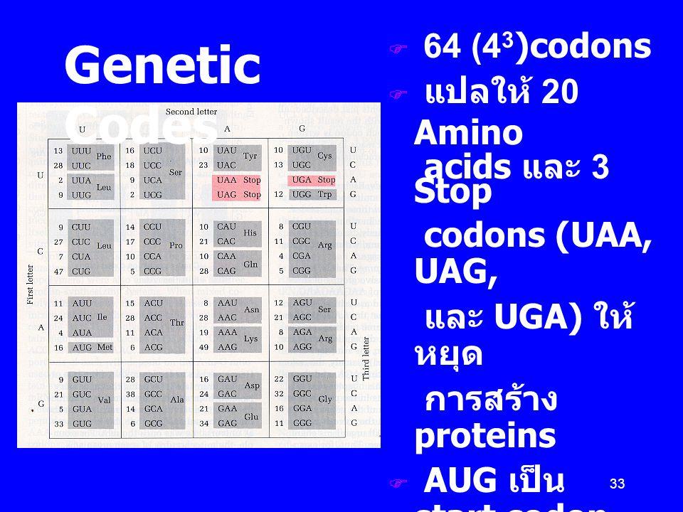 33  64 (4 3 )codons  แปลให้ 20 Amino  acids และ 3 Stop  codons (UAA, UAG,  และ UGA) ให้ หยุด  การสร้าง proteins  AUG เป็น start codon ให้เริ่มก