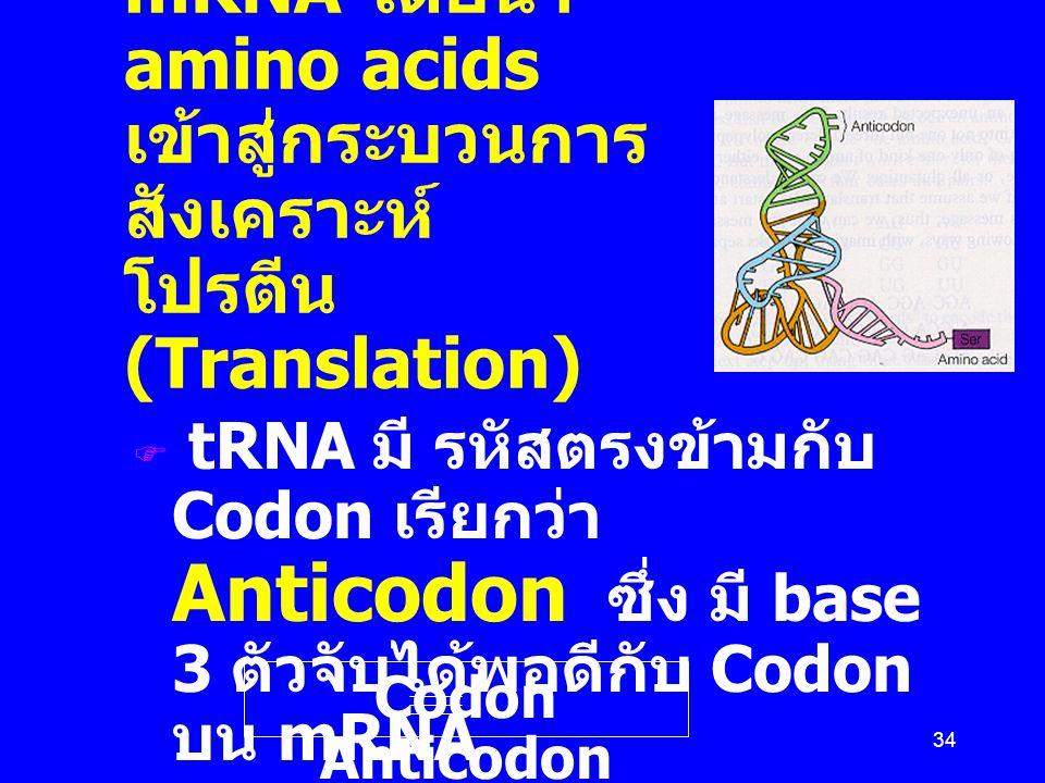 34 Transfer RNA (tRNA) เป็นผู้แปลหรืออ่าน รหัสบน mRNA โดยนำ amino acids เข้าสู่กระบวนการ สังเคราะห์ โปรตีน (Translation)  tRNA มี รหัสตรงข้ามกับ Codo