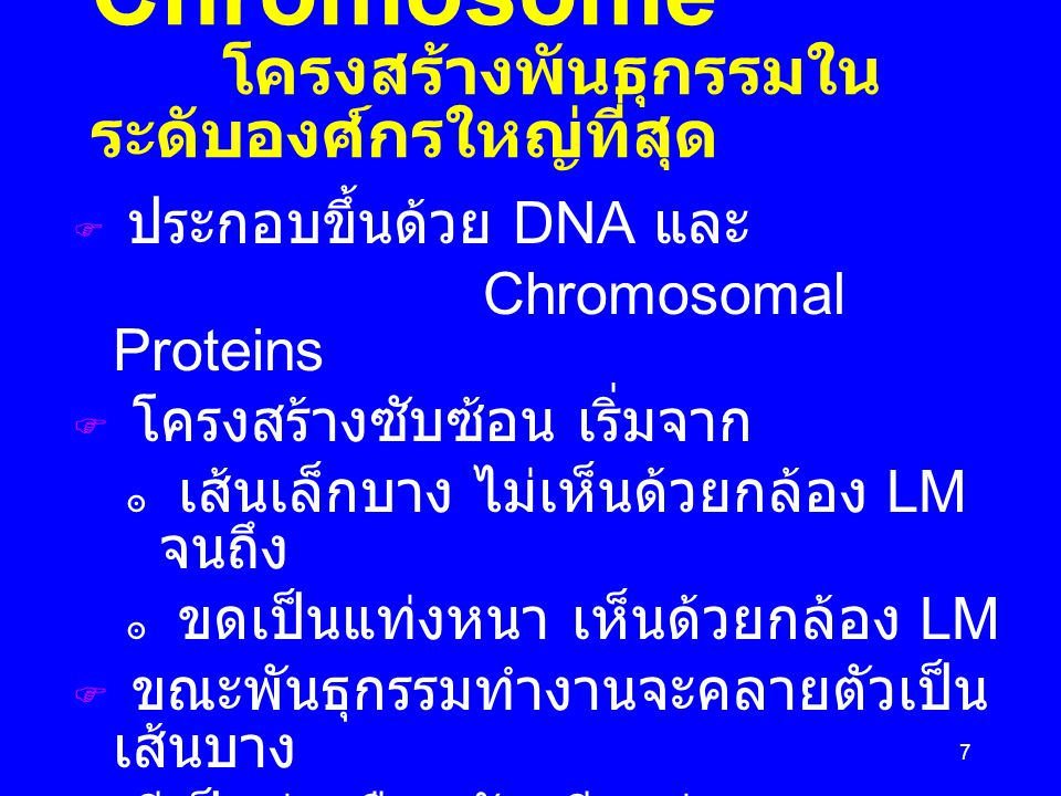38 สรุป : From DNA to Phenotype