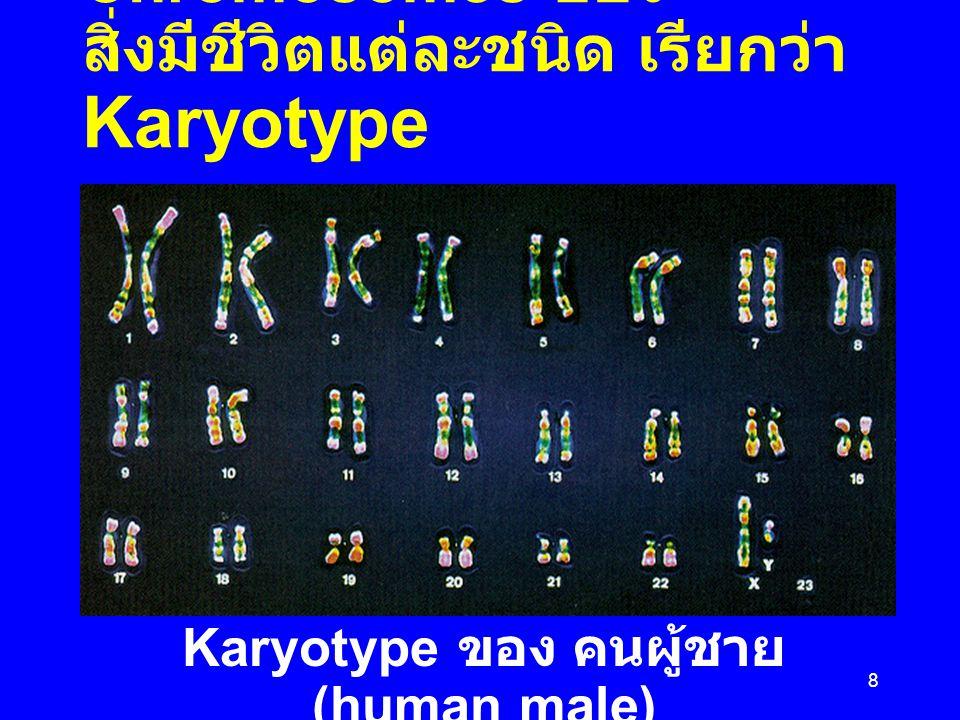 8 ลักษณะ และ จำนวนของ Chromosomes ของ สิ่งมีชีวิตแต่ละชนิด เรียกว่า Karyotype Karyotype ของ คนผู้ชาย (human male)