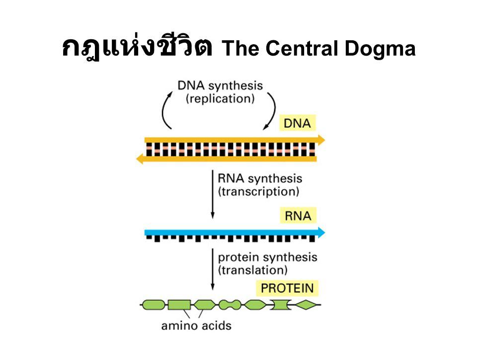 กฎแห่งชีวิต The Central Dogma