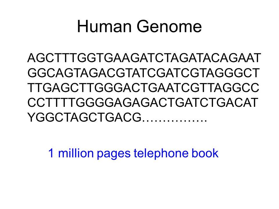 Human Genome AGCTTTGGTGAAGATCTAGATACAGAAT GGCAGTAGACGTATCGATCGTAGGGCT TTGAGCTTGGGACTGAATCGTTAGGCC CCTTTTGGGGAGAGACTGATCTGACAT YGGCTAGCTGACG……………. 1 mi