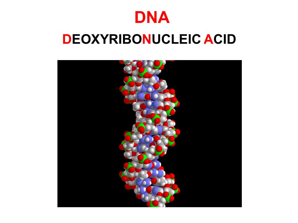 ความรู้พื้นฐานที่นำไปสู่ เทคโนโลยีชีวภาพ DNA คือสารพันธุกรรม โครงสร้างของ DNA อณูชีววิทยา (molecular biology) หรือวิชาที่ว่า ด้วยการศึกษาโครงสร้าง และการทํางานของ สิ่งมีชีวิตในระดับโมเลกุล