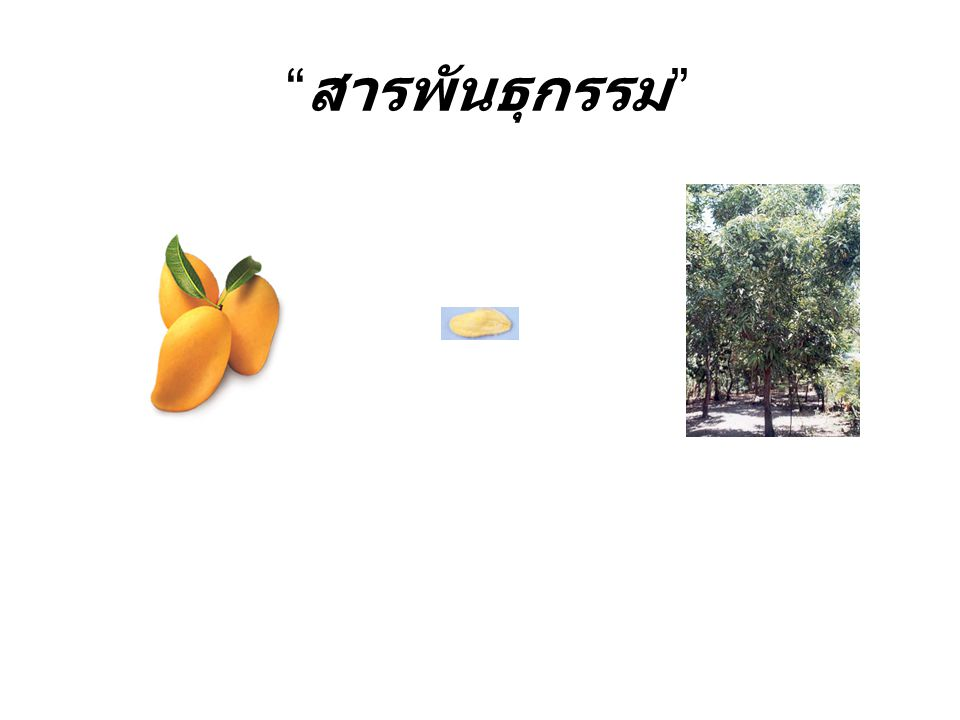 GM Cotton & GM Tomato & GM Papaya