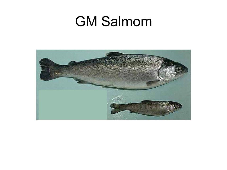 GM Salmom