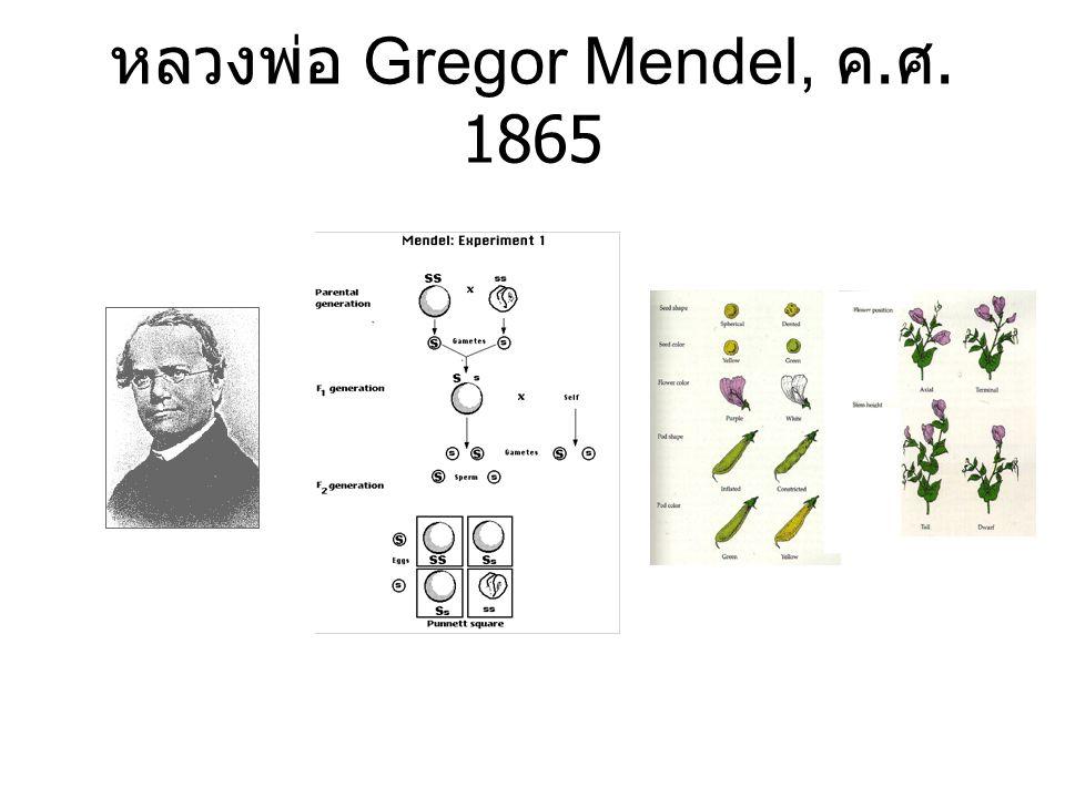 หลวงพ่อ Gregor Mendel, ค. ศ. 1865