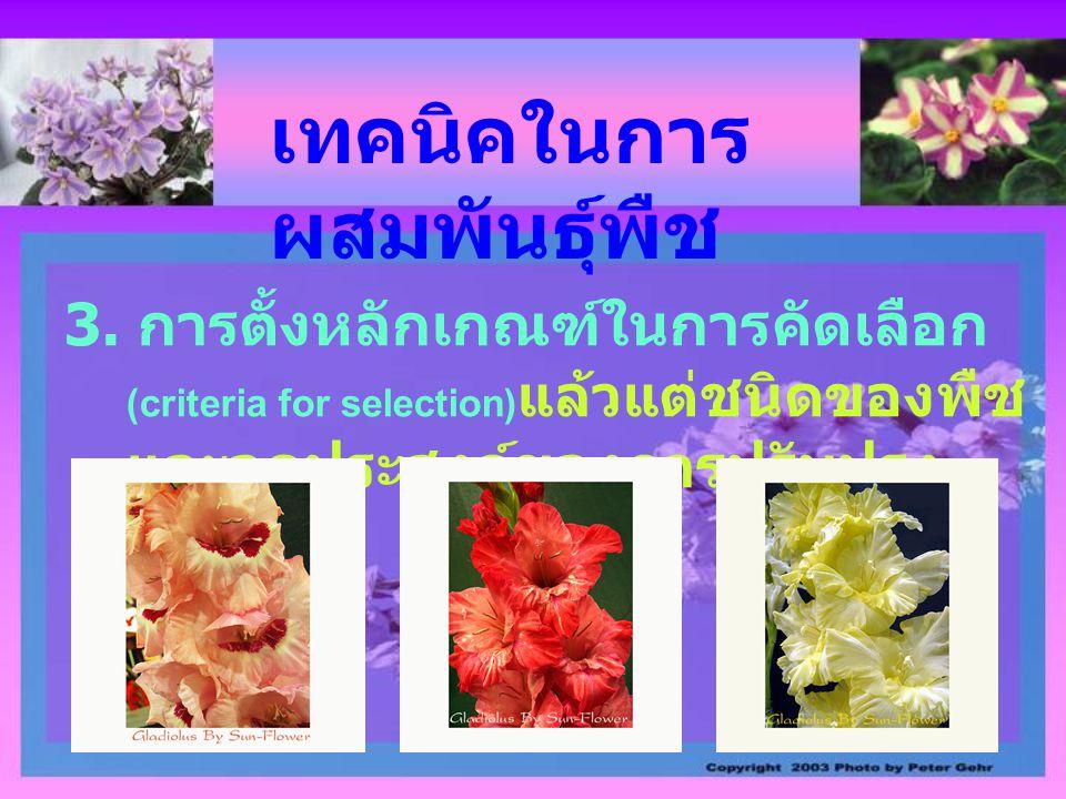 เทคนิคในการ ผสมพันธุ์พืช 3. การตั้งหลักเกณฑ์ในการคัดเลือก (criteria for selection) แล้วแต่ชนิดของพืช และจุดประสงค์ของการปรับปรุง พันธุ์