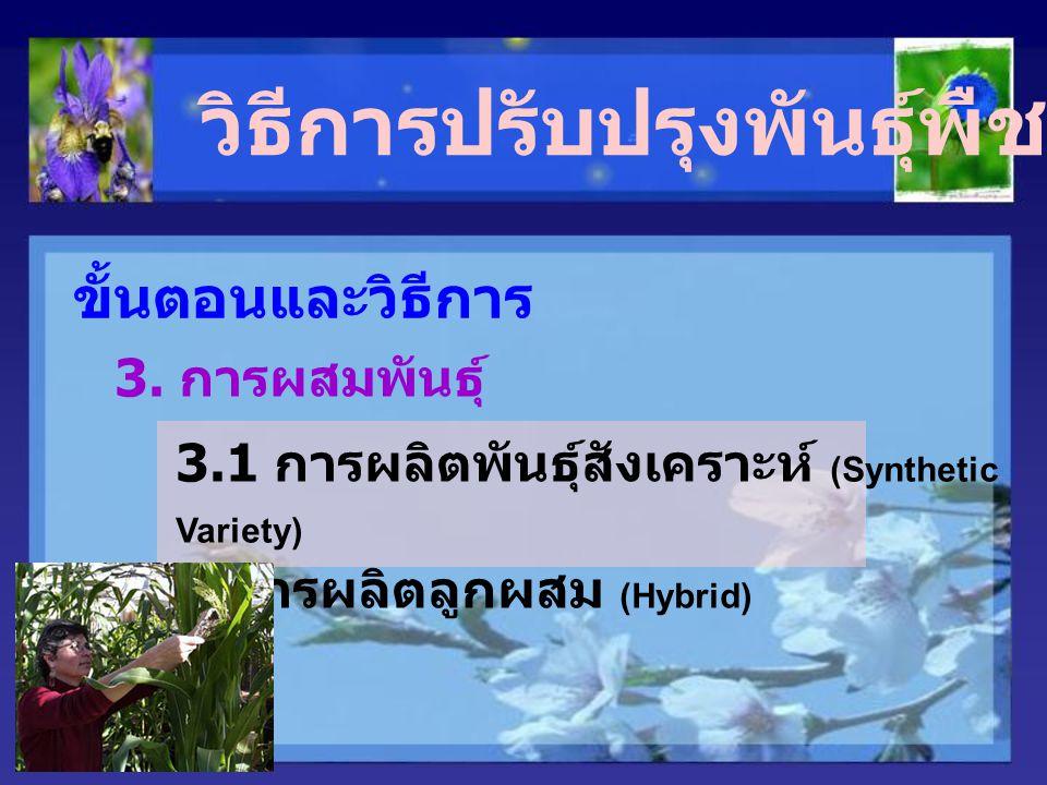 วิธีการปรับปรุงพันธุ์พืชผสมข้าม ขั้นตอนและวิธีการ 3. การผสมพันธุ์ 3.1 การผลิตพันธุ์สังเคราะห์ (Synthetic Variety) 3.2 การผลิตลูกผสม (Hybrid)