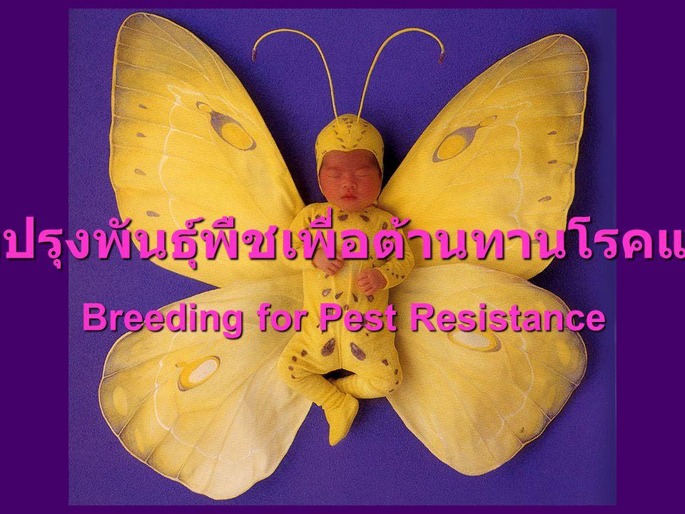 การปรับปรุงพันธุ์พืชเพื่อต้านทานโรคและแมลง Breeding for Pest Resistance