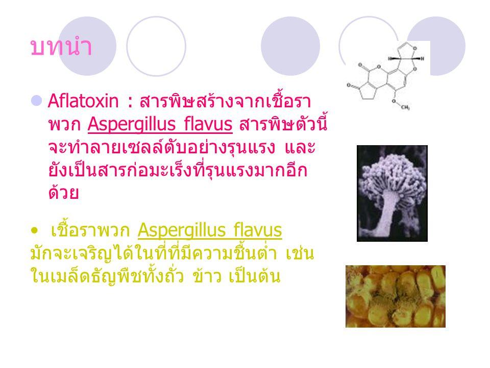 บทนำ Aflatoxin : สารพิษสร้างจากเชื้อรา พวก Aspergillus flavus สารพิษตัวนี้ จะทำลายเซลล์ตับอย่างรุนแรง และ ยังเป็นสารก่อมะเร็งที่รุนแรงมากอีก ด้วย เชื้อราพวก Aspergillus flavus มักจะเจริญได้ในที่ที่มีความชื้นต่ำ เช่น ในเมล็ดธัญพืชทั้งถั่ว ข้าว เป็นต้น