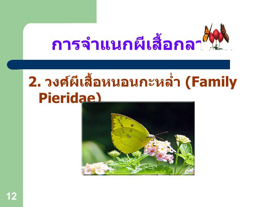 11 การจำแนกผีเสื้อกลางวัน 1. วงศ์ผีเสื้อหางติ่ง (Family Papilionidae)