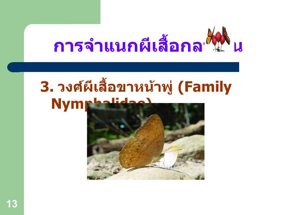 12 การจำแนกผีเสื้อกลางวัน 2. วงศ์ผีเสื้อหนอนกะหล่ำ (Family Pieridae)