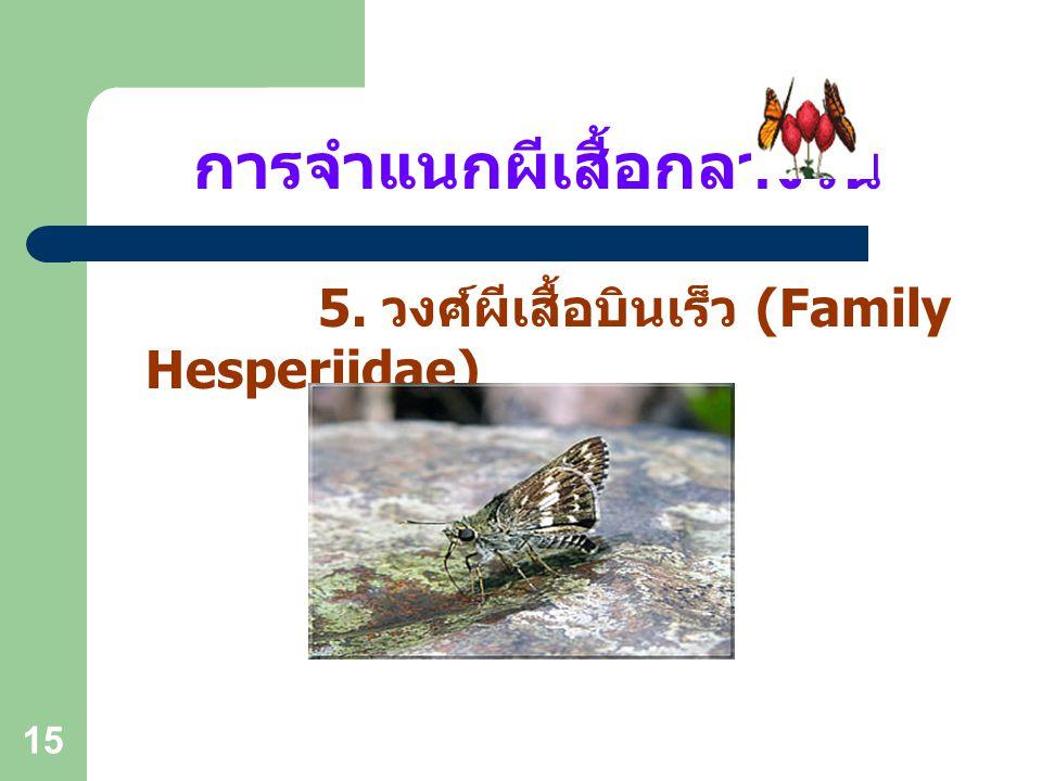14 การจำแนกผีเสื้อกลางวัน 4. วงศ์ผีเสื้อมรกต, สีน้ำเงิน (Family Lycaenidae)