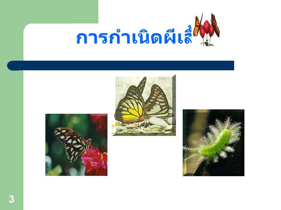 13 การจำแนกผีเสื้อกลางวัน 3. วงศ์ผีเสื้อขาหน้าพู่ (Family Nymphalidae)