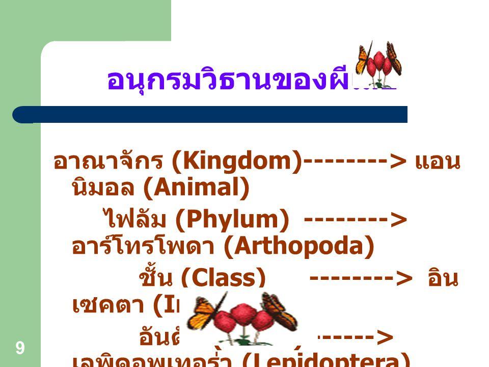 9 อนุกรมวิธานของผีเสื้อ อาณาจักร (Kingdom)--------> แอน นิมอล (Animal) ไฟลัม (Phylum) --------> อาร์โทรโพดา (Arthopoda) ชั้น (Class) --------> อิน เซคตา (Insecta) อันดับ (Order) ------> เลพิดอพเทอร่า (Lepidoptera)