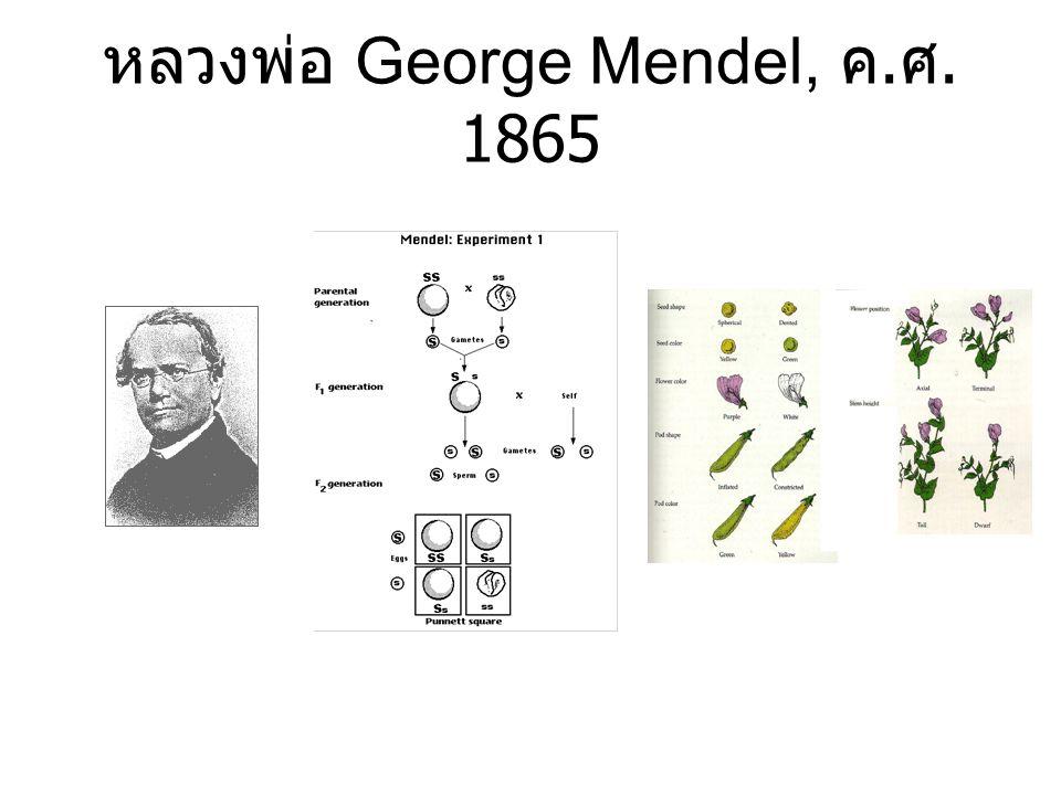 หลวงพ่อ George Mendel, ค. ศ. 1865